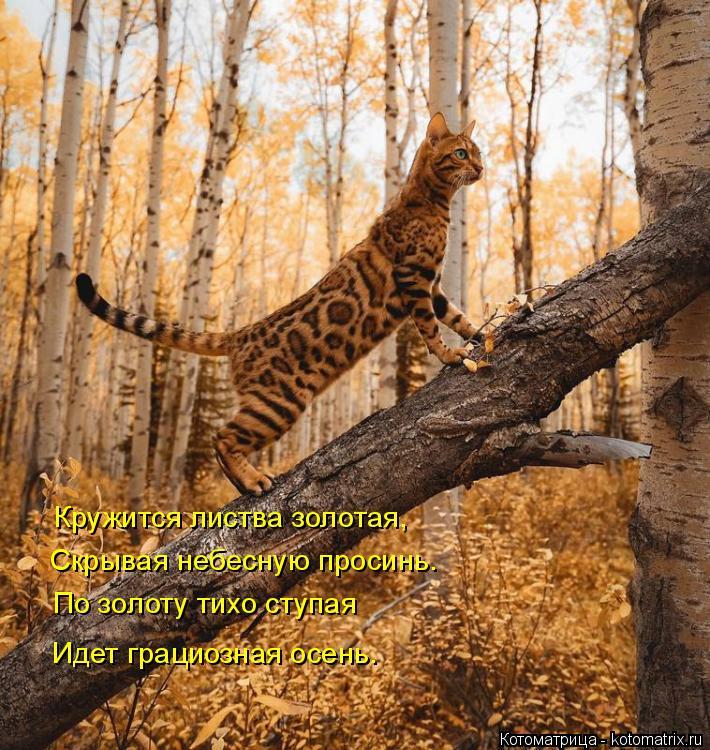 Котоматрица: Кружится листва золотая, Кружится листва золотая, Скрывая небесную просинь. По золоту тихо ступая Идет грациозная осень.