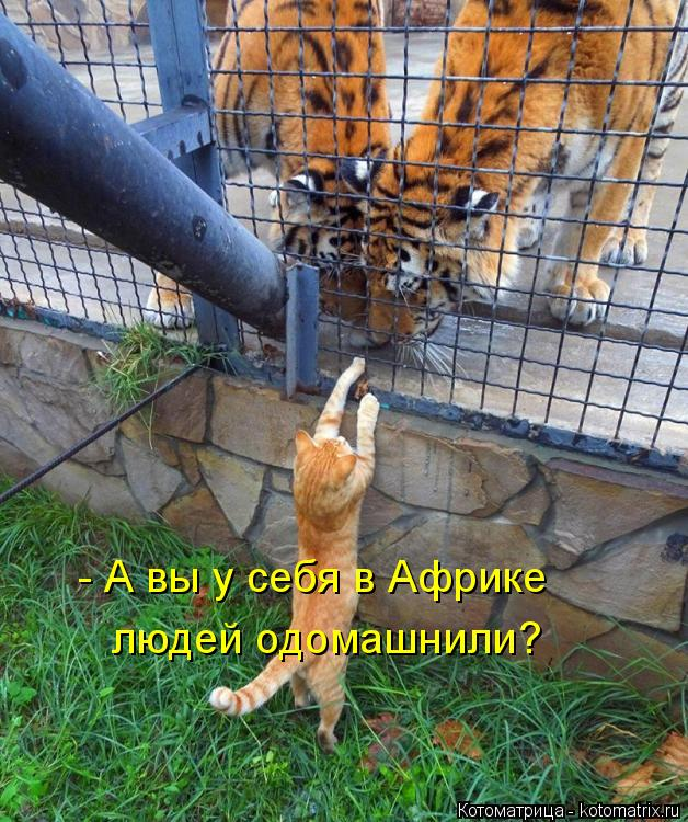 http://kotomatrix.ru/images/lolz/2018/09/28/kotomatritsa_9.jpg