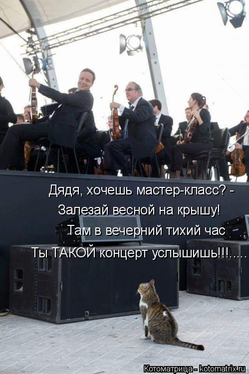 Котоматрица: Ты ТАКОЙ концерт услышишь!!!..... Дядя, хочешь мастер-класс? -  Залезай весной на крышу! Там в вечерний тихий час