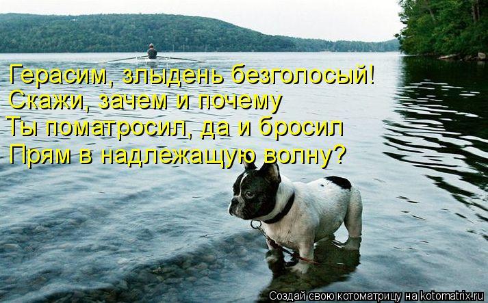 Котоматрица: Герасим, злыдень безголосый! Скажи, зачем и почему Ты поматросил, да и бросил Прям в надлежащую волну?