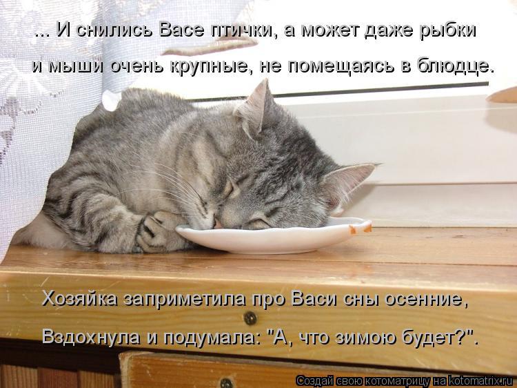 Котоматрица: ... И снились Васе птички, а может даже рыбки и мыши очень крупные, не помещаясь в блюдце. Хозяйка заприметила про Васи сны осенние, Вздохнула