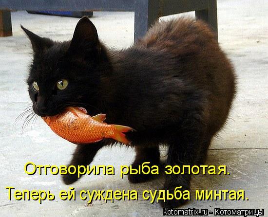 Котоматрица: Отговорила рыба золотая. Теперь ей суждена судьба минтая.