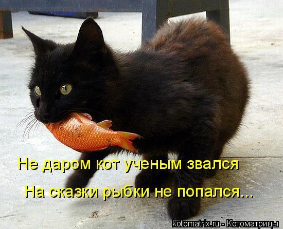 Котоматрица: Не даром кот ученым звался На сказки рыбки не попался...