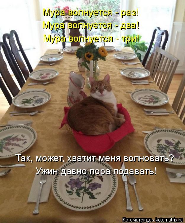 Котоматрица: Мура волнуется - раз! Мура волнуется - два! Мура волнуется - три! Так, может, хватит меня волновать? Ужин давно пора подавать!