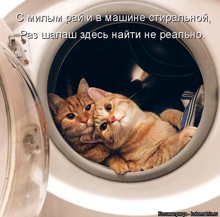 Котоматрица: С милым рай и в машине стиральной, Раз шалаш здесь найти не реально.