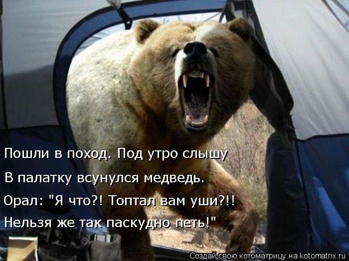 """Котоматрица: Пошли в поход. Под утро слышу В палатку всунулся медведь. Орал: """"Я что?! Топтал вам уши?!! Нельзя же так паскудно петь!"""""""