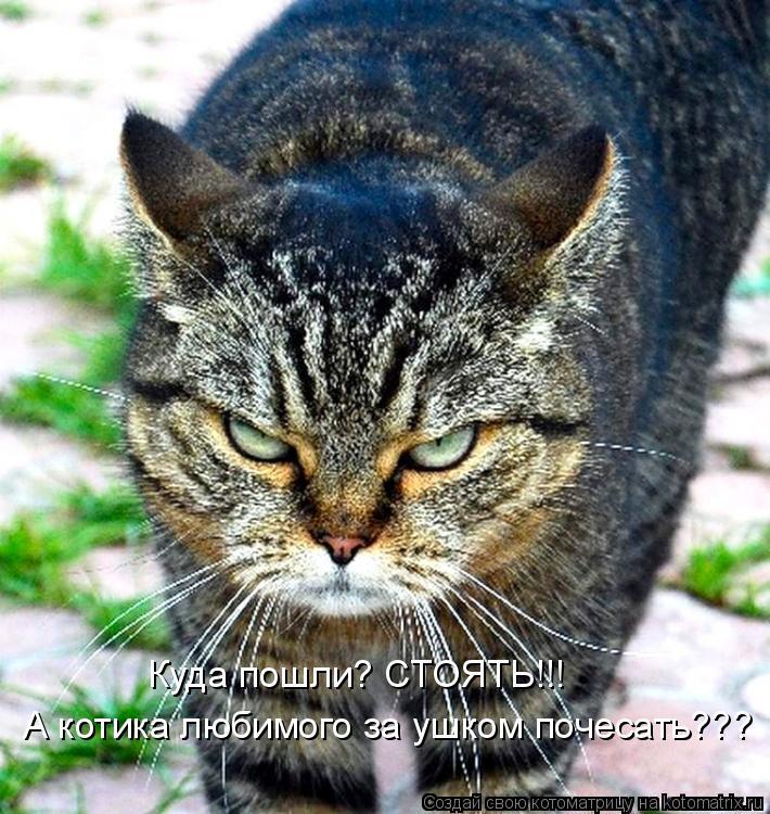 Котоматрица: Куда пошли? СТОЯТЬ!!! А котика любимого за ушком почесать???