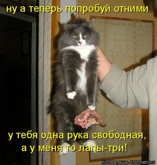 Котоматрица: ну а теперь попробуй отними у тебя одна рука свободная, а у меня то лапы-три!