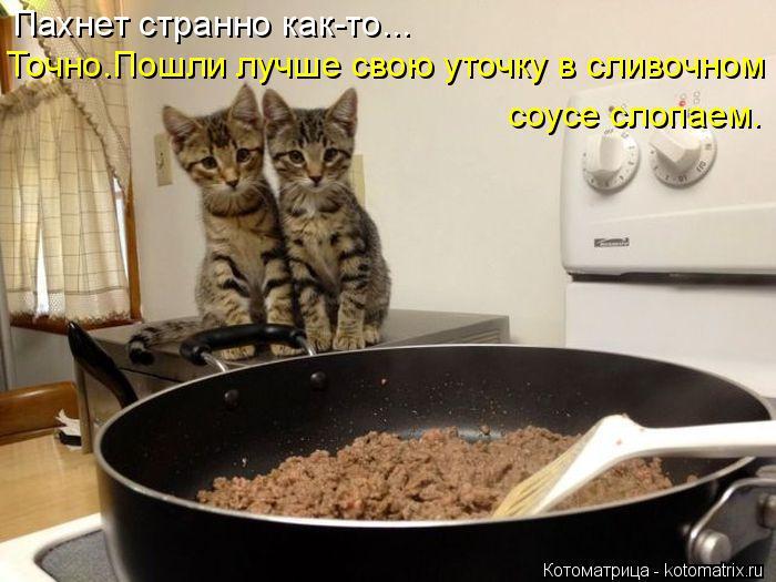 Котоматрица: Пахнет странно как-то... Точно.Пошли лучше свою уточку в сливочном соусе слопаем.