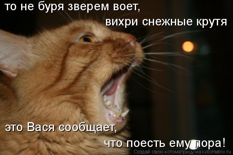 Котоматрица: то не буря зверем воет, вихри снежные крутя это Вася сообщает, что поесть ему пора!