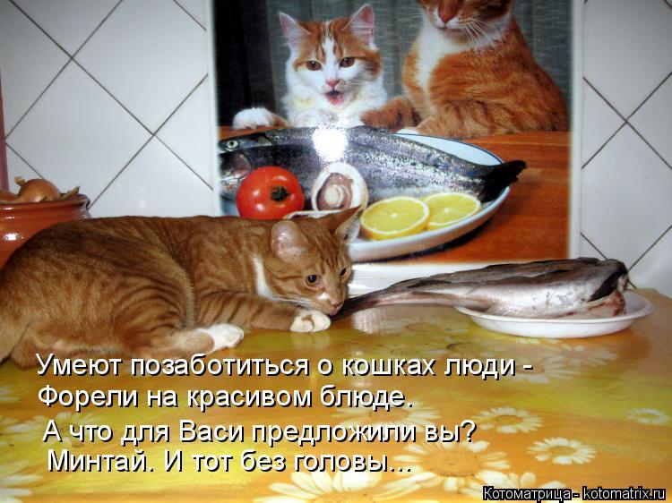 Котоматрица: Умеют позаботиться о кошках люди - Форели на красивом блюде. А что для Васи предложили вы? Минтай. И тот без головы...