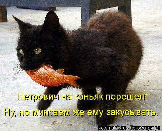 Котоматрица: Петрович на коньяк перешел! Ну, не минтаем же ему закусывать.