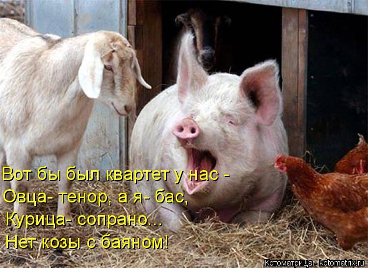 Котоматрица: Вот бы был квартет у нас - Овца- тенор, а я- бас, Нет козы с баяном!  Курица- сопрано...