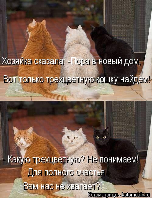 Котоматрица: Хозяйка сказала: -Пора в новый дом, Вот только трехцветную кошку найдем! - Какую трехцветную? Не понимаем! Для полного счастья  Вам нас не хва?