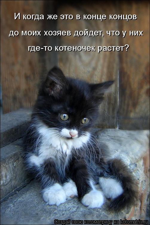 Котоматрица: И когда же это в конце концов до моих хозяев дойдет, что у них где-то котеночек растет?