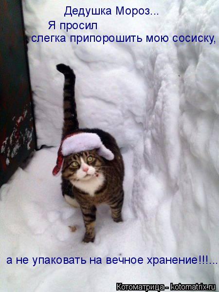 Котоматрица: слегка припорошить мою сосиску, Я просил  Дедушка Мороз... а не упаковать на вечное хранение!!!...