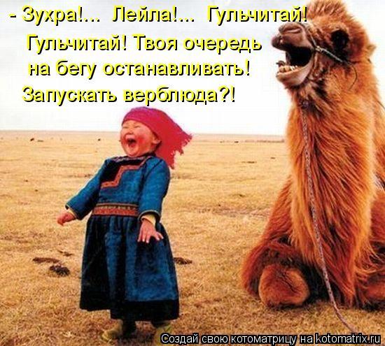 Котоматрица: - Зухра!...  Лейла!...  Гульчитай! Гульчитай! Твоя очередь  на бегу останавливать! Запускать верблюда?!