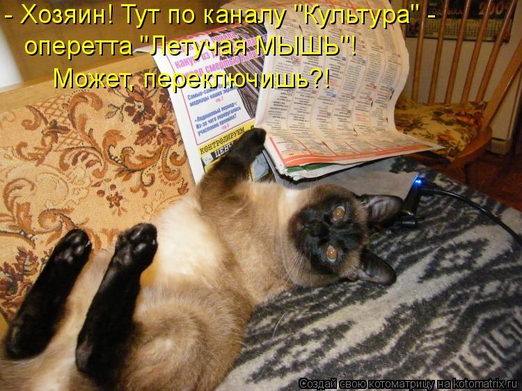 "Котоматрица: - Хозяин! Тут по каналу ""Культура"" - оперетта ""Летучая МЫШЬ""! Может, переключишь?!"