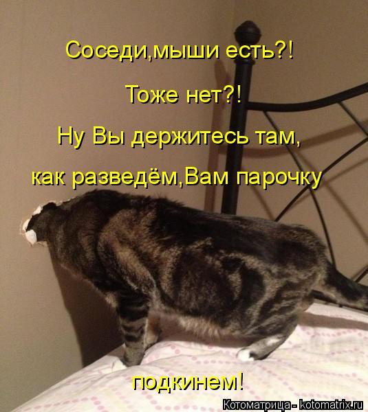 Котоматрица: Соседи,мыши есть?! Тоже нет?! Ну Вы держитесь там, как разведём,Вам парочку подкинем!