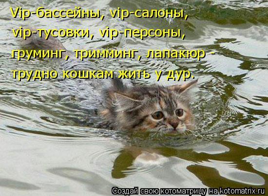 Котоматрица: Vip-бассейны, vip-салоны, vip-тусовки, vip-персоны, груминг, тримминг, лапакюр -  трудно кошкам жить у дур.