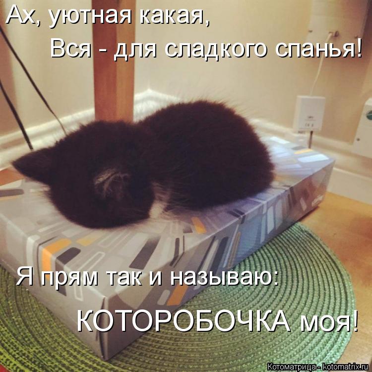 Котоматрица: Ах, уютная какая, Вся - для сладкого спанья! Я прям так и называю: КОТОРОБОЧКА моя!