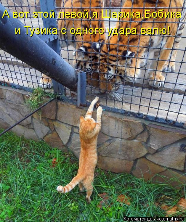 Котоматрица: А вот этой левой,я Шарика,Бобика и Тузика с одного удара валю!