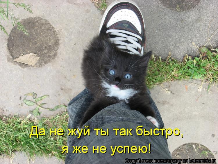 Котоматрица: Да не жуй ты так быстро, я же не успею!