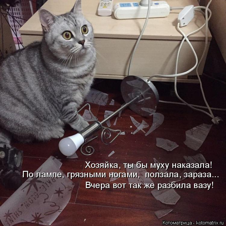 Котоматрица: Хозяйка, ты бы муху наказала! По лампе, грязными ногами,  ползала, зараза... Вчера вот так же разбила вазу!