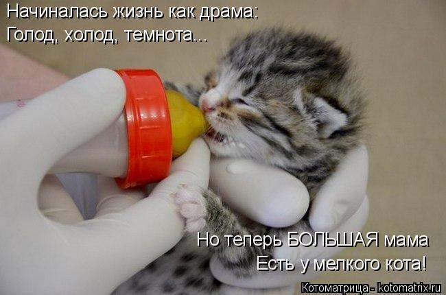 Котоматрица: Начиналась жизнь как драма: Голод, холод, темнота... Но теперь БОЛЬШАЯ мама Есть у мелкого кота!
