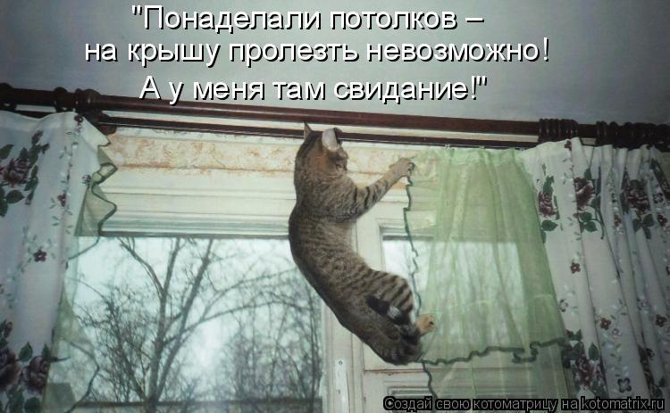 """Котоматрица: """"Понаделали потолков – на крышу пролезть невозможно! А у меня там свидание!"""""""