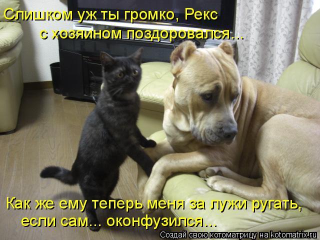 Котоматрица: Как же ему теперь меня за лужи ругать, если сам... оконфузился... Слишком уж ты громко, Рекс с хозяином поздоровался...