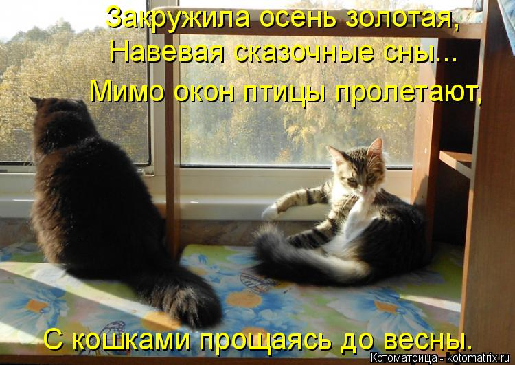 Котоматрица: Закружила осень золотая, Навевая сказочные сны... Мимо окон птицы пролетают, С кошками прощаясь до весны.