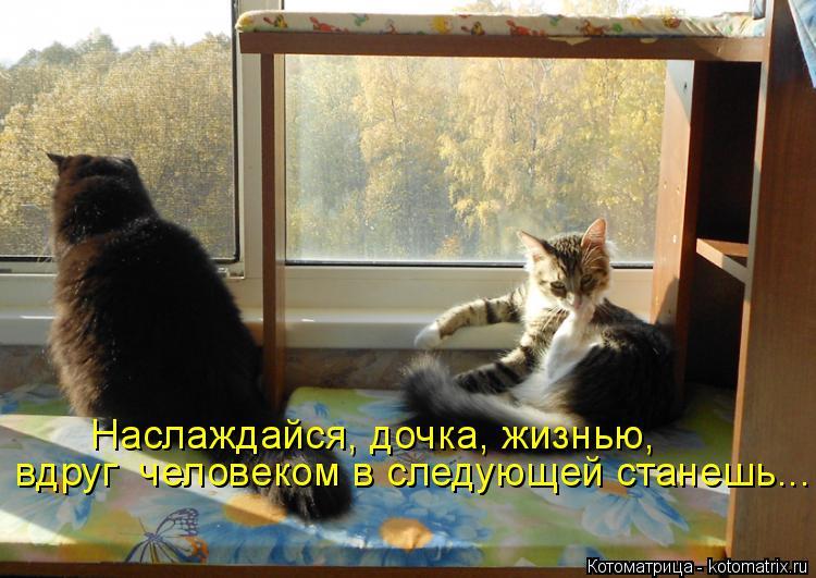 Котоматрица: Наслаждайся, дочка, жизнью, вдруг  человеком в следующей станешь...