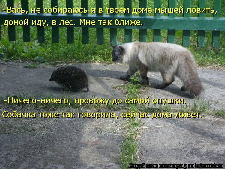 Котоматрица: -Вась, не собираюсь я в твоем доме мышей ловить,  домой иду, в лес. Мне так ближе. -Ничего-ничего, провожу до самой опушки.  Собачка тоже так гов?