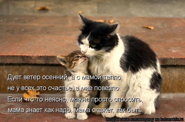 Котоматрица: Дует ветер осенний, а с мамой тепло, не у всех это счастье, а мне повезло. мама знает как надо, мама скажет, как быть. Если что-то неясно, можно ?