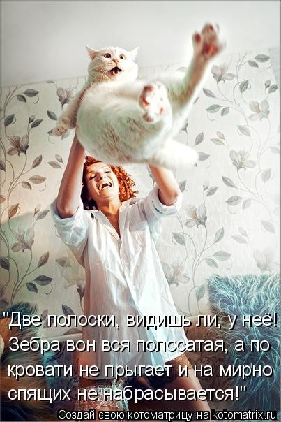 """Котоматрица: """"Две полоски, видишь ли, у неё! Зебра вон вся полосатая, а по  кровати не прыгает и на мирно  спящих не набрасывается!"""""""