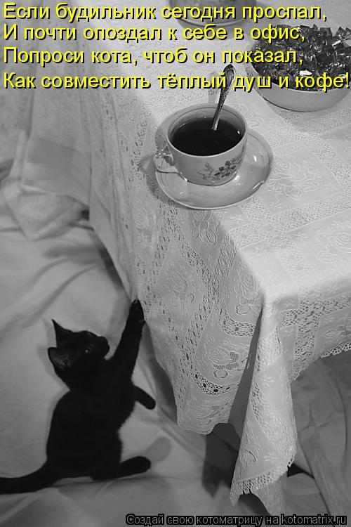 Котоматрица: Если будильник сегодня проспал, И почти опоздал к себе в офис, Попроси кота, чтоб он показал, Как совместить тёплый душ и кофе!