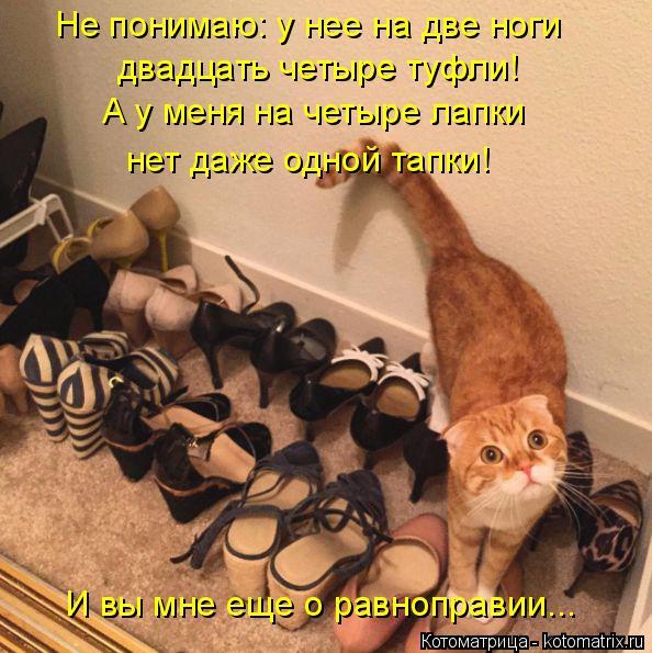 Котоматрица: Не понимаю: у нее на две ноги  двадцать четыре туфли!  А у меня на четыре лапки нет даже одной тапки! И вы мне еще о равноправии...