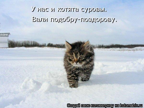 Котоматрица: У нас и котята суровы. Вали подобру-поздорову.