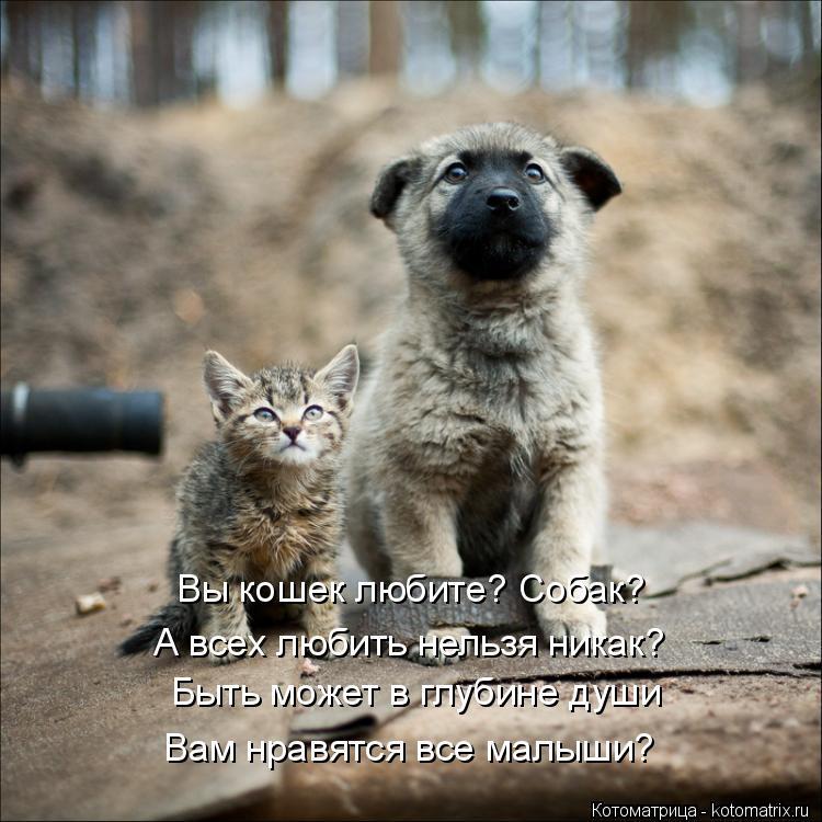Котоматрица: Вы кошек любите? Собак? А всех любить нельзя никак? Быть может в глубине души Вам нравятся все малыши?