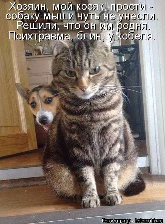 Котоматрица: Хозяин, мой косяк, прости - собаку мыши чуть не унесли. Решили, что он им родня. Психтравма, блин, у кобеля.