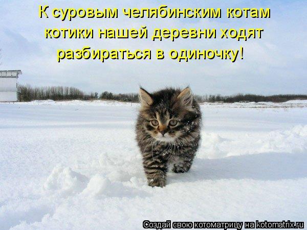 Котоматрица: К суровым челябинским котам котики нашей деревни ходят  разбираться в одиночку!