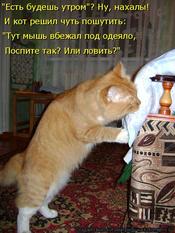 """Котоматрица: """"Есть будешь утром""""? Ну, нахалы! И кот решил чуть пошутить: """"Тут мышь вбежал под одеяло, Поспите так? Или ловить?"""""""