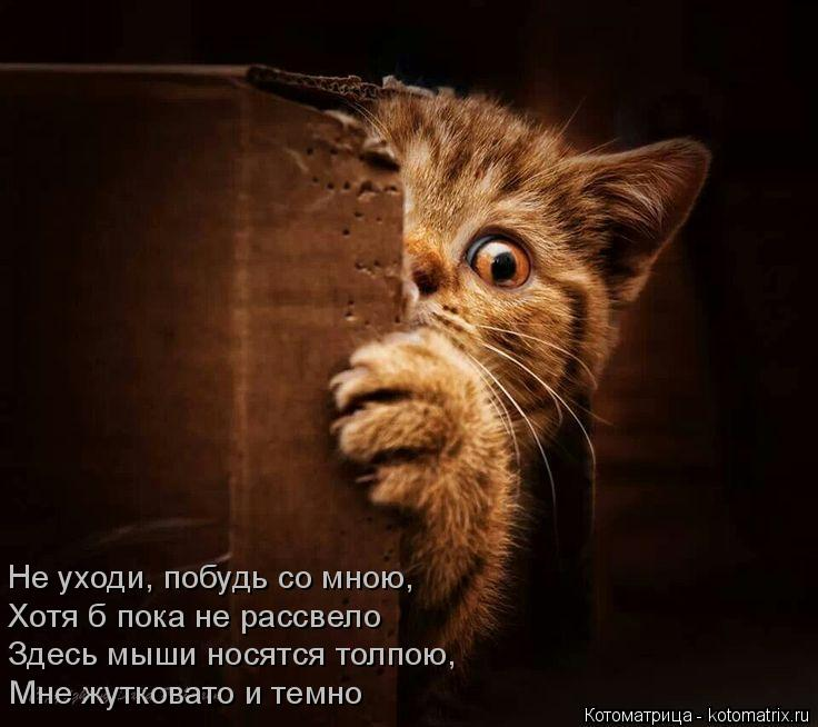 Котоматрица: Мне жутковато и темно  Здесь мыши носятся толпою, Хотя б пока не рассвело  Не уходи, побудь со мною,