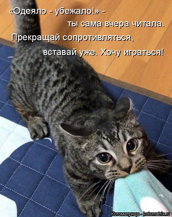 Котоматрица: «Одеяло - убежало!» -  ты сама вчера читала. Прекращай сопротивляться, вставай уже. Хочу играться!