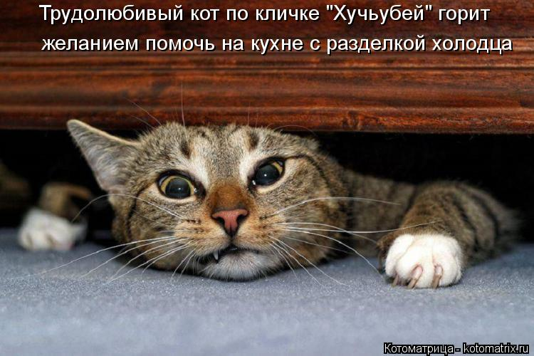 """Котоматрица: Трудолюбивый кот по кличке """"Хучьубей"""" горит желанием помочь на кухне с разделкой холодца"""