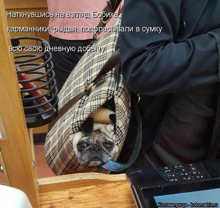 Котоматрица: Наткнувшись на взгляд Бобика, карманники, рыдая, подбрасывали в сумку всю свою дневную добычу.