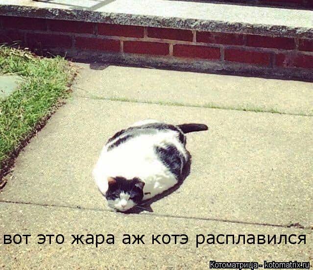 Котоматрица: вот это жара вот это жара аж котэ расплавился