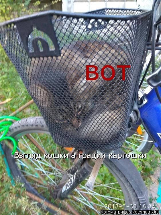 Котоматрица: Взгляд кошки а грация картошки вот
