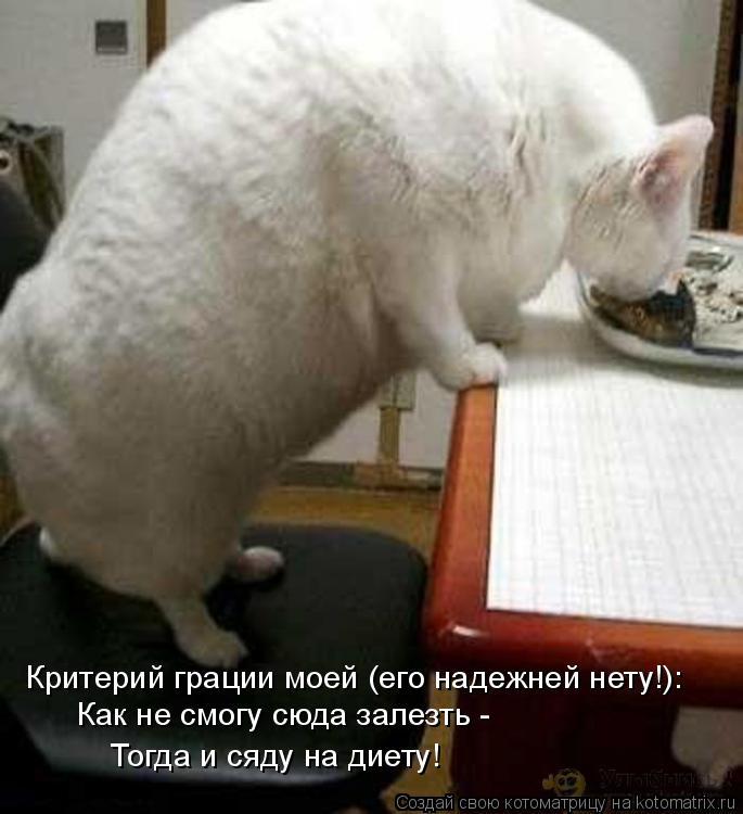 Котоматрица: Критерий грации моей (его надежней нету!): Как не смогу сюда залезть - Тогда и сяду на диету!
